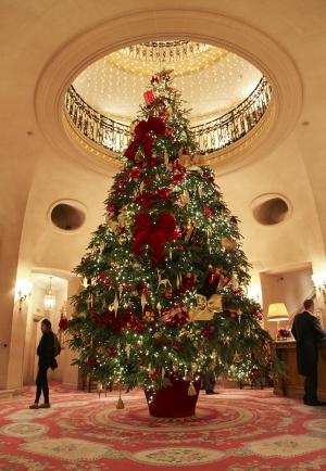 Christmas Tree Norway Spruce